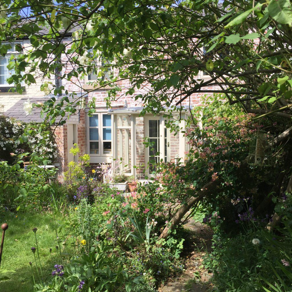 Overgrown trees in back garden of Gillian's hosue